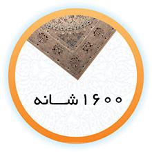 1600Shaneh.jpg